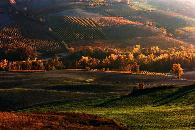 Oltrepò Pavese vineyards landscape