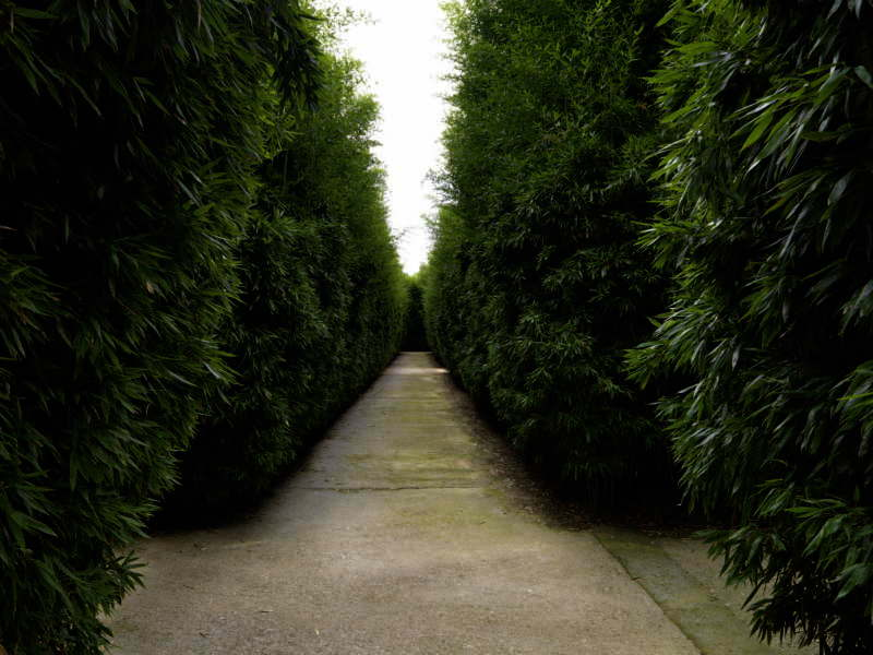 labirinto - giardino